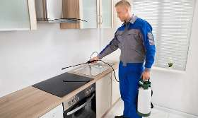 Reasons Why Pest Control Treatments are Necessary