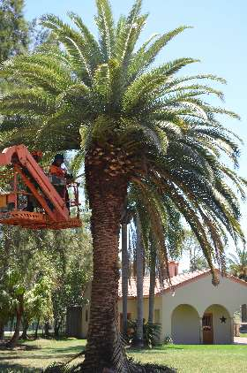 Cutting Edge Tree Maintenance