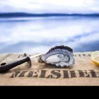 Melshell Oysters Logo