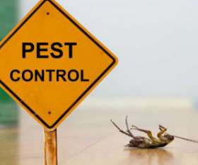 Pest Control Services in Kambah