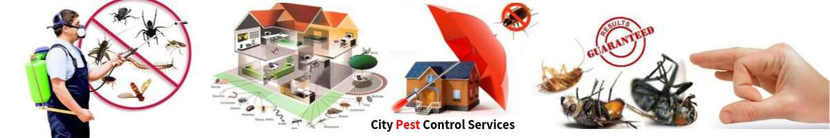 City Pest Control Services Canberra and Queanbeyan Banner