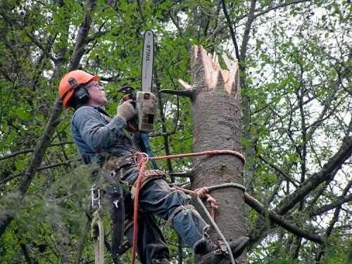 What Does An Arborist Do