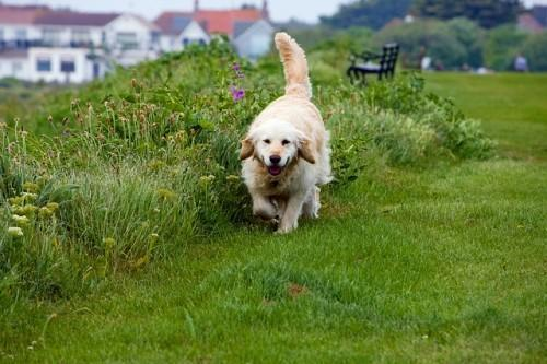 Top 4 Pointers When Choosing a Pet Care Centre for Your Dog