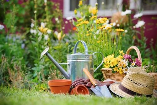 Important Things You Need to Know When Starting a Garden