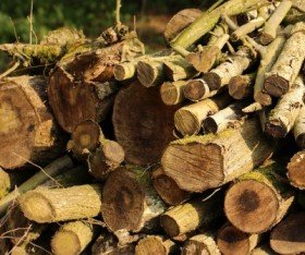 Things That Destroys Timber