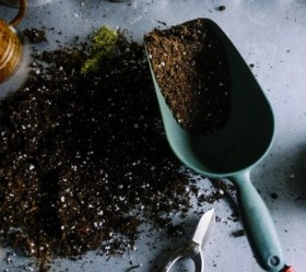 Soil 101 (Everything You Need to Know About It)