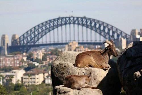 Taronga Zoo – A Must Visit Place in Sydney