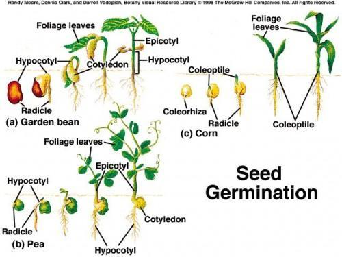 How to Select a Good Seed for Your Garden
